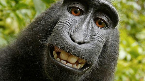 140901 Monkey Smiling
