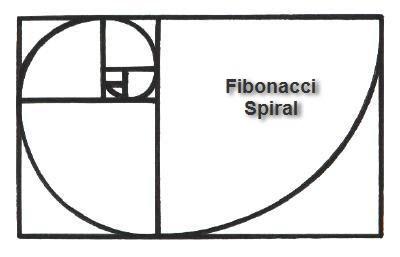 FIBONACCI SPIRAL drawing