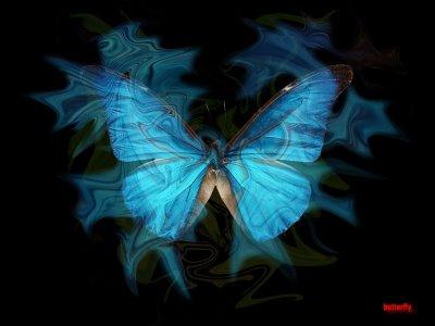 Butterfly_blue2